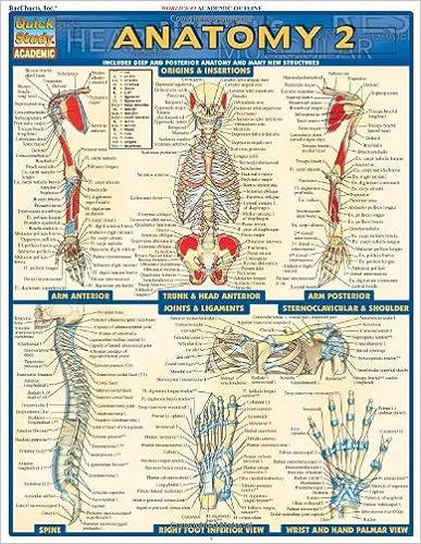 Anatomy 2 (Quickstudy: Academic)