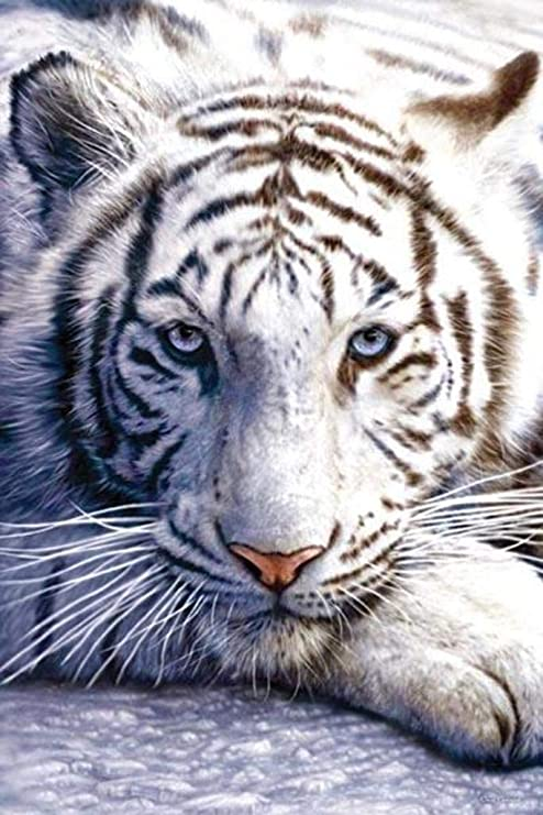 Nature Animal White Bengal Tigers Big Cat Pair Beautiful Canvas Art Print