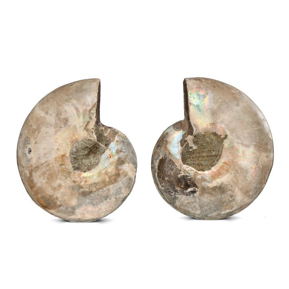 KALIFANO Extinct Natural Ammonite Shell Pair Fossil Stone - Madagascar by ALEXANDER KALIFANO (Image #4)