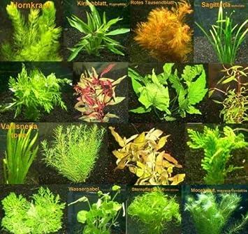 140 Aquarienpflanzen In Rot Und Grun 20 Bund Amazon De Haustier