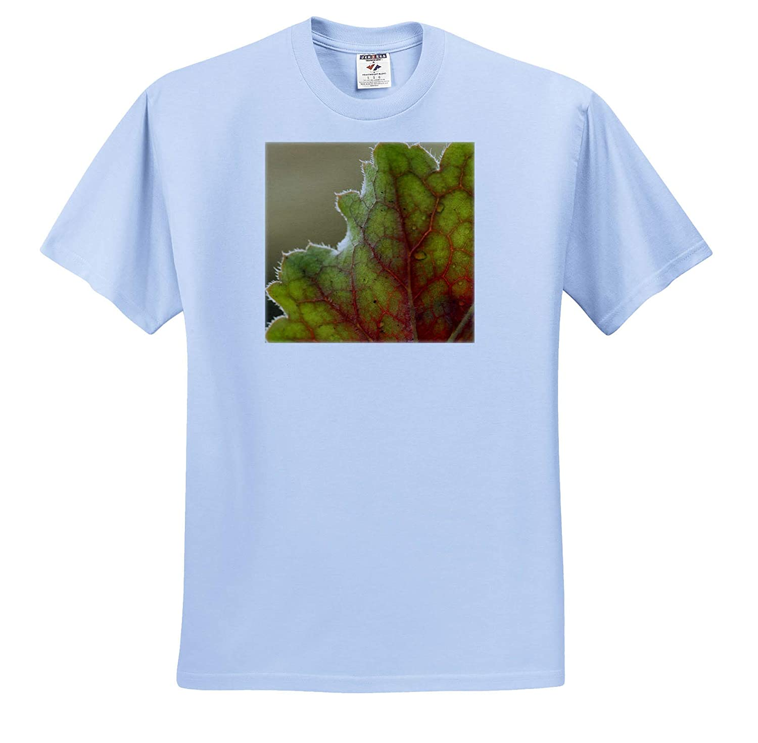 - T-Shirts 3dRose Stamp City Nature A Macro Photograph of a Leaf from The Coral Bells Plant