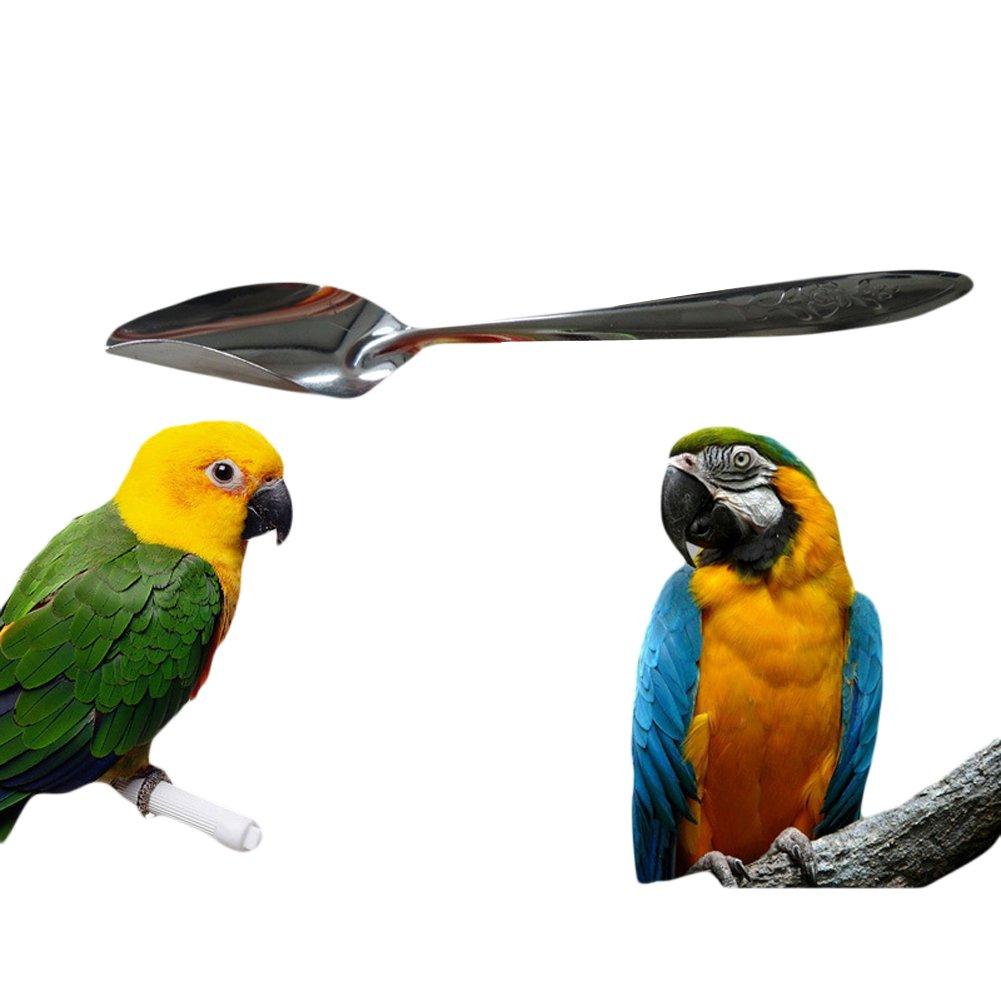 tianxun Edelstahl Bird Parrot Feeder Metall Fütterlöffel