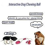 LAIHUI Pet Elasticity Ball,Dog Chew Toy Teeth