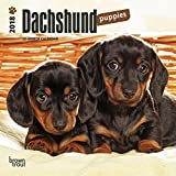 Dachshund Puppies 2018 7 x 7 Inch Monthly Mini Wall Calendar, Animals Dog Breeds Puppies