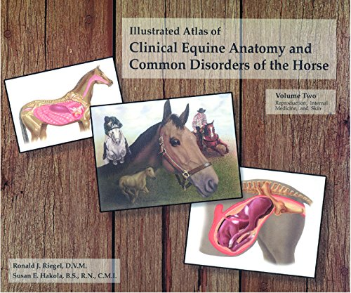 The Illustrated Atlas of Clinical Equine Anatomy and Common Disorders of the Horse (Vol 2)