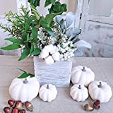 BESTTOYHOME 12 PCS Assorted Sizes Rustic Harvest