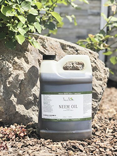 Zatural Organic Virgin Neem Oil 1 Gallon: 100% Natural Pure Cold Pressed No Additives, Unrefined Concentrate for Body and Skin, Pets, and Plants or Garden by Zatural (Image #5)