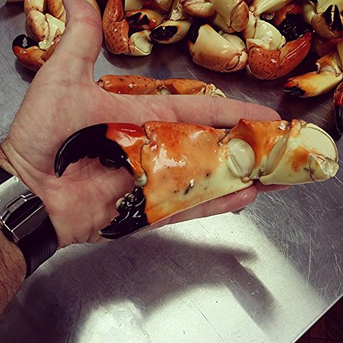 Florida Stone Crab Claws Jumbo 10 lb, Fresh Wild caught