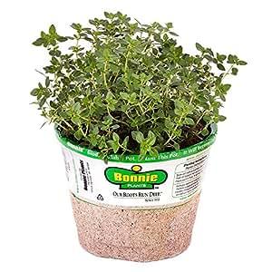 Bonnie Plants 5116 Lemon Thyme Herb Plant