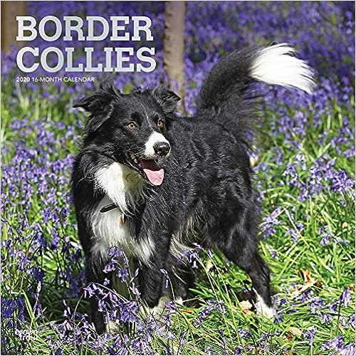 Télécharger des livres Border Collies 2020 Calendar: Foil Stamped Cover