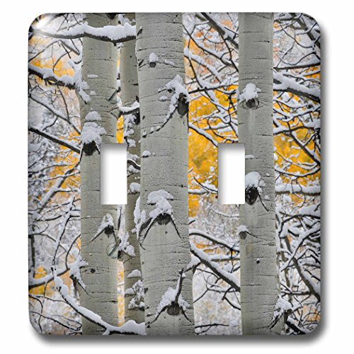 3dRose Danita Delimont - Forests - Autumn aspens with snows, Keebler Pass, Rocky Mountains, Colorado - Light Switch Covers - double toggle switch ()