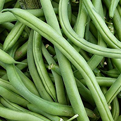 Blue Lake FM1K Pole Bean Seeds - Non-GMO, Heirloom - Green Bean Vegetable Garden Seeds - Phaseolus vulgaris