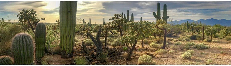 SZZWY Dusk Desert Cactuses Plants Scenic 15x8ft Vinyl Photography Background Sunset Desolate Place Scenery Backdrop Wedding Shoot Indoor Decors Landscape Wallpaper Studio