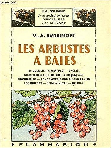 Amazon Fr Les Arbustes A Baies Groseillier A Grappes Cassis