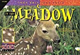In the Meadow, David M. Schwartz, 1574712136