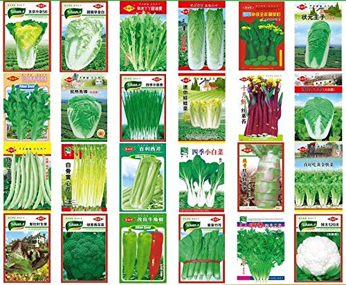 napa Cabbage 300seeds Champion Chinese Cabbage: Garden Yard Pot Balcony Green Vegetable Seeds Organic Non-GMO Vegetable Seed Sowing Seasons Genuine Balcony Garden Seeds ()