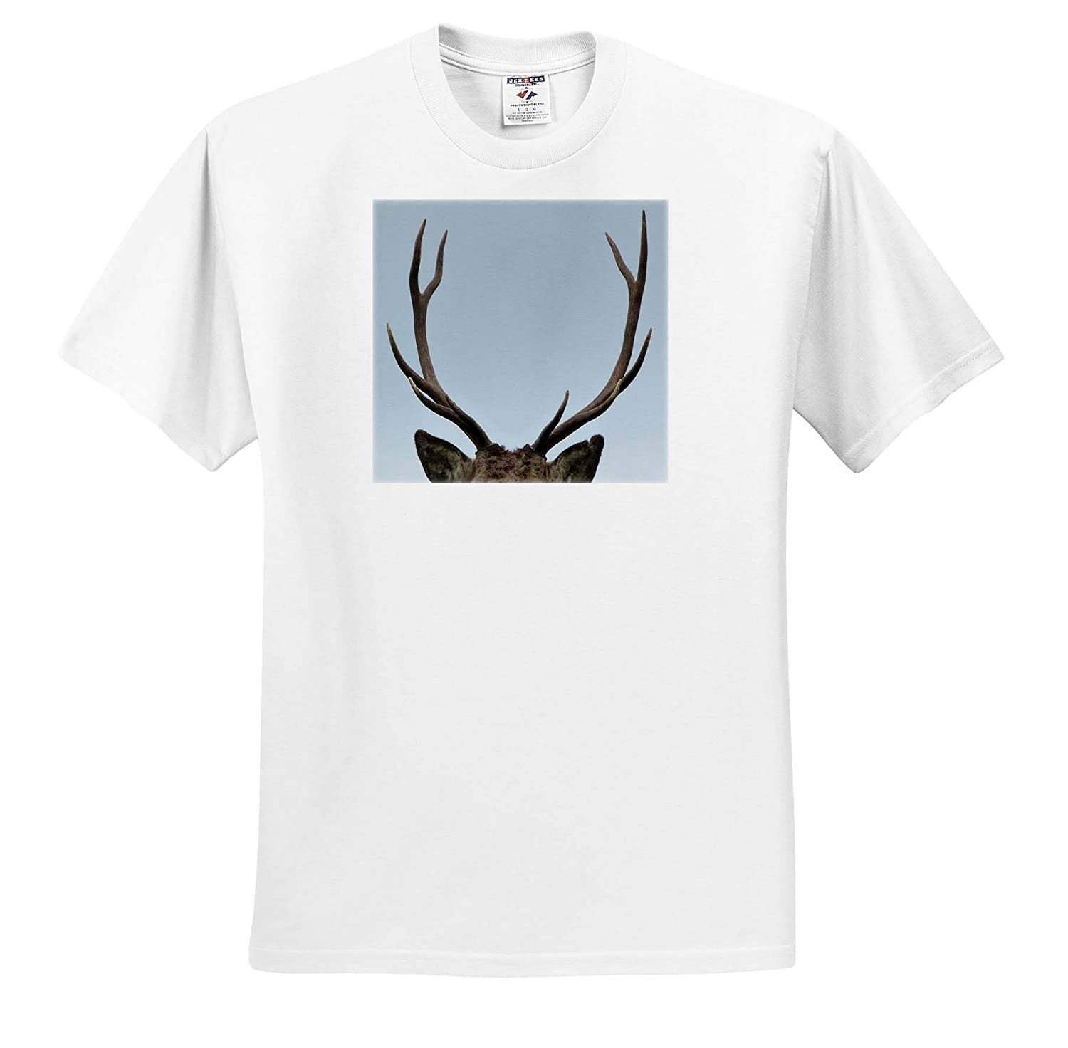 Close up of Stag Antlers Photograph T-Shirts 3dRose Made in The Highlands Stag Antlers Highlands of Scotland