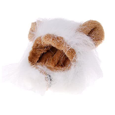 Baoblade Baoblaze Gorros para Mascotas Accesorios Divertida Peluca Perfecta para Perros Gatos Complimentos - Gato 3: Amazon.es: Deportes y aire libre