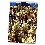 3dRose Danita Delimont - Cactus - USA, California, Joshua Tree National Park. Teddy Bear Cholla Cactus. - 12x18 Hand Towel (twl_209293_1)