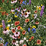 Outsidepride Northeast Wildflower Seed Mix - 5 LB
