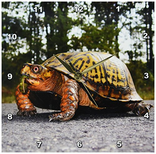 Cheap 3dRose dpp_92471_1 New Jersey, Great Swamp NWR Eastern Box Turtle – US31 JGL0022 – Jim Gilbert – Wall Clock, 10 by 10-inch