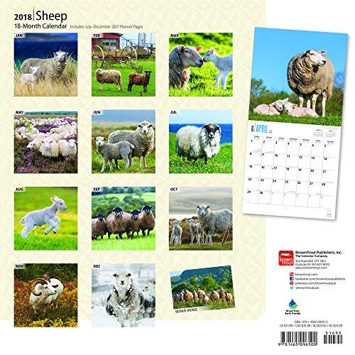 Secret Garden: Sheep 2018 12 X 12″ Monthly Wall Calendar
