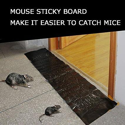 Site de rencontre pour les rats