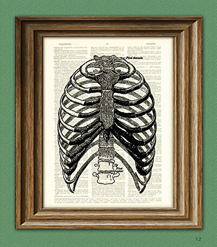 Human RIB CAGE from Gray's Anatomy illustration beautifully upcycled dictionary page book art print