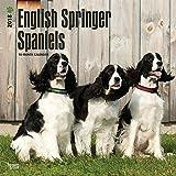 English Springer Spaniels 2018 Wall Calendar