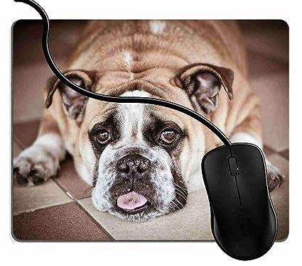0e25ae688894 Amazon.com : Mouse Pad Bull Dog Mouse Mat for Computer Laptops ...