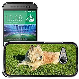 Hot Style Cell Phone PC Hard Case Cover // M00114211 Dog Playing Park Canine Doggy Furry // HTC One Mini 2 / M8 MINI / (Not Fits M8)