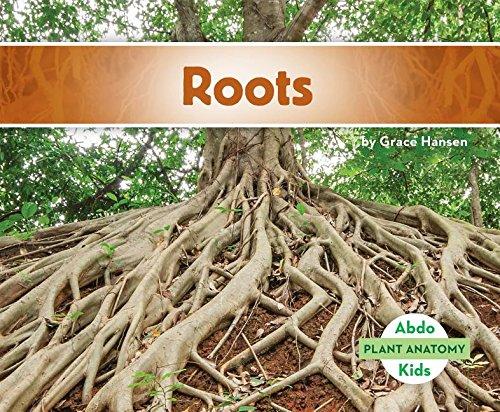 Roots (Plant Anatomy): Grace Hansen: 9781680801385: Amazon.com: Books