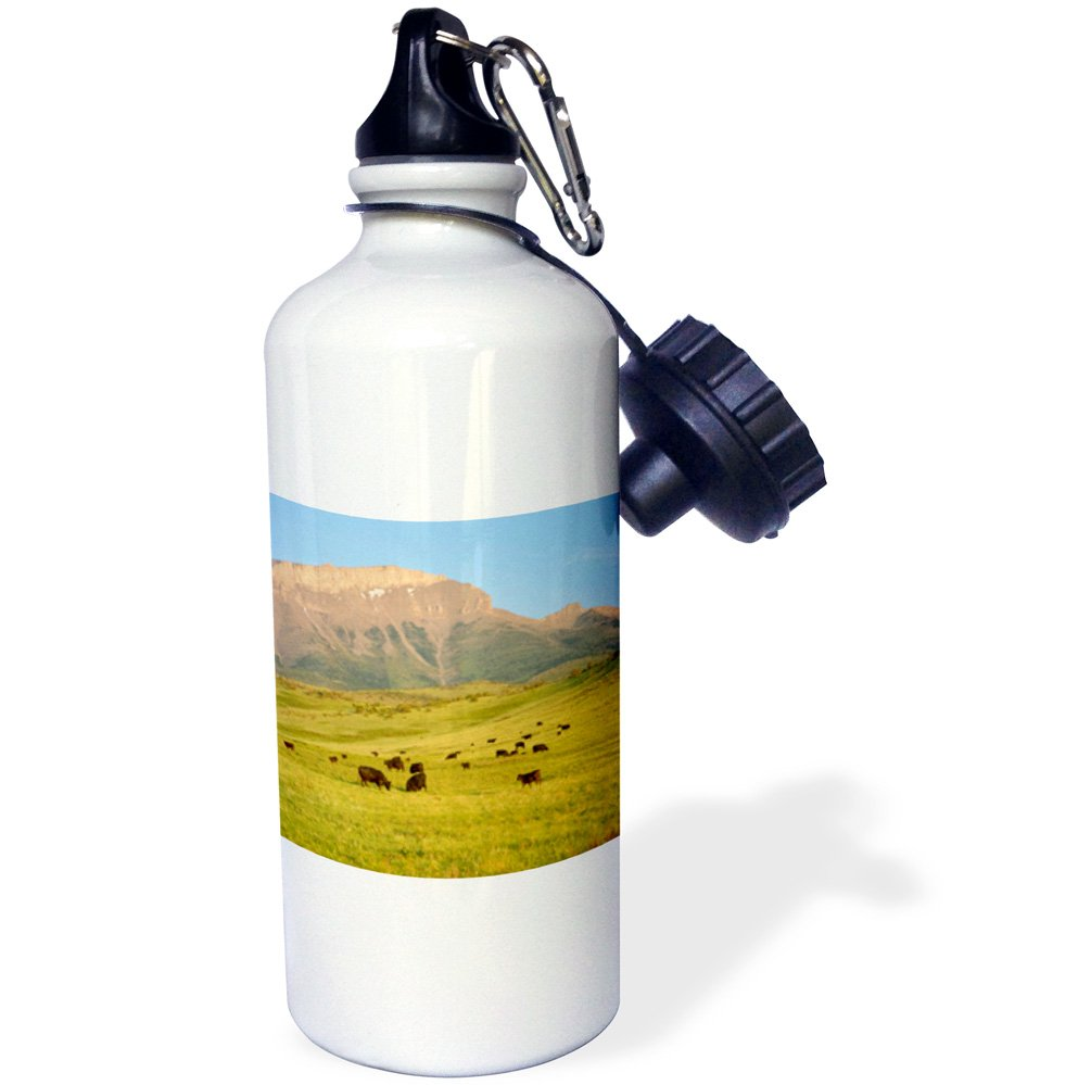 3dRose wb_91650_1 ''Black angus cattle, Farm Animal, Rocky Mountain, MT US27 CHA0889 Chuck Haney'' Sports Water Bottle, 21 oz, White