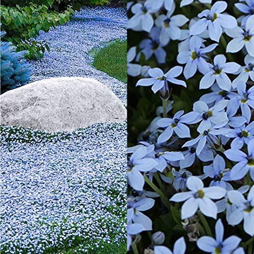 Dickin Outdoor Gardening Yard Blue Foot Grass Seeds Shade Home Lawn Decoration Flowers