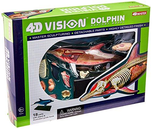 - Famemaster 4D-Vision Dolphin Anatomy Model