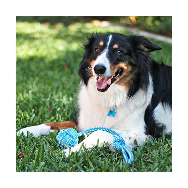 Pacific Pups Products supporting pacificpuprescue.com dog rope toys for aggressive chewers-set of 11 nearly indestructible dog toys-bonus giraffe rope toys-benefits non profit dog rescue. 5