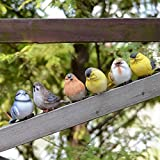 Vkenis 6PCS Gardening Decorations Small Birds Simulation Ornaments Birds For Sale