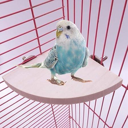 AYRSJCL en Abanico pájaro del Loro de Madera del Estante del ...
