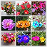 TOSHUN 100 Pieces/lot s/Bag Portulaca Grandiflora Heat Tolerant Plants