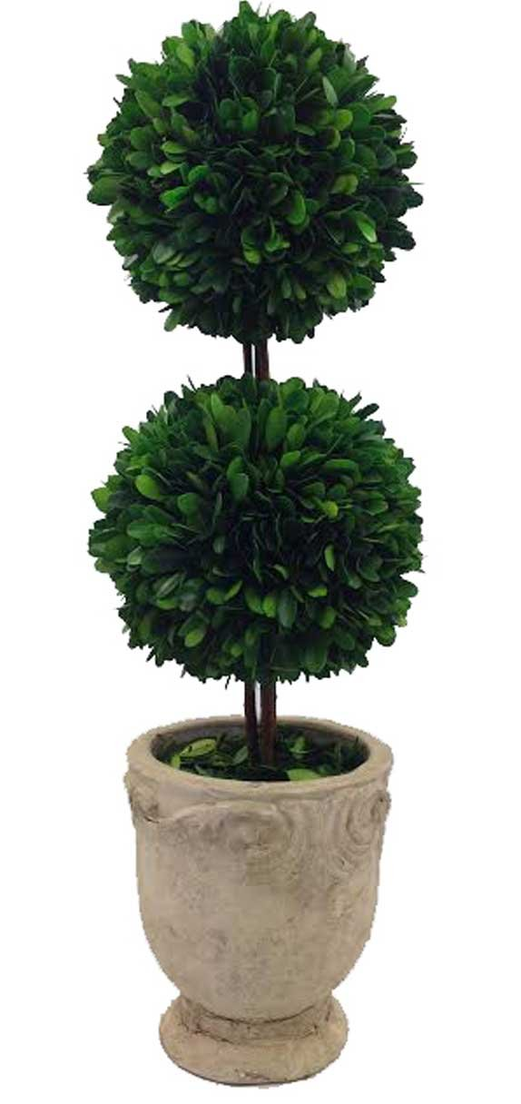 Preserved Boxwood Dble Ball Topiary W/ Footed Pot 21'' by Flora Decor