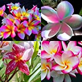 """MIXED 4 CUTTING "" FRAGRANT PLUMERIA'S CUTTING WITH ROOTED 7-12 INCHES REGISTERED TRACK ONLINE 100%GUARANTEE SATISFICATION AND …"