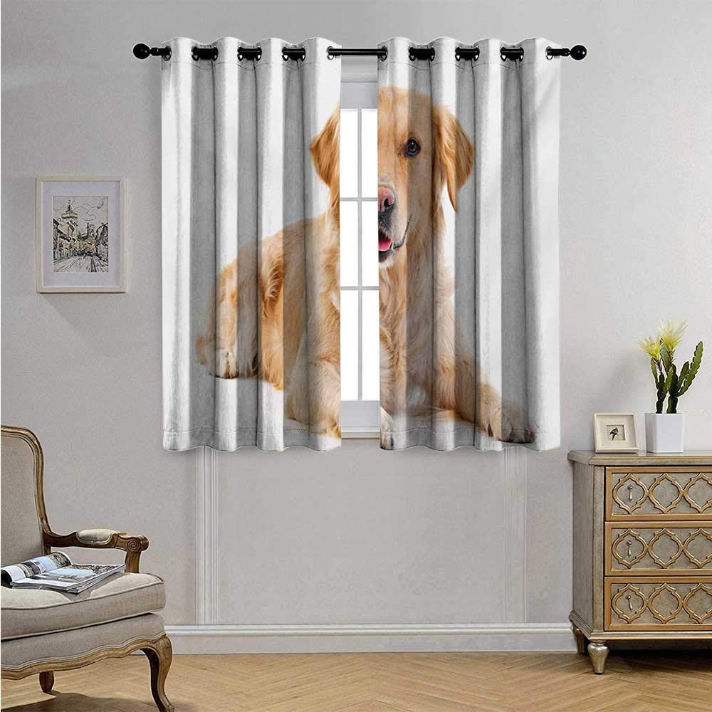 Golden RetrieverBlackoutDraperiesforBedroomYoung Pedigree Puppy Laying Over White Background Sweet Baby Dog Blackout Drapes W63 x L63(160cm x 160cm) Sand Brown White
