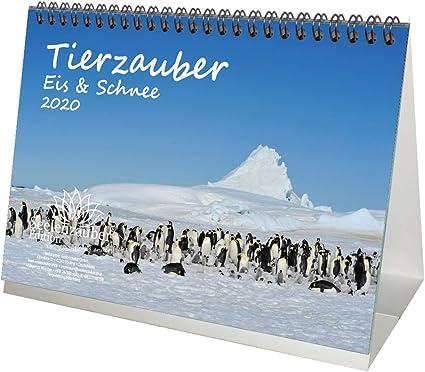 Tierzauber – Calendario de mesa 2020, diseño de animales de la ...