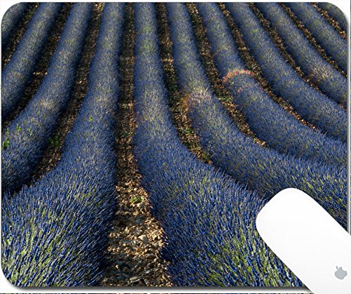 Luxlady Gaming Mousepad 9.25in X 7.25in IMAGE: 25174887 Lavender field locate in Provence region in (Lavender Harvest Provence)