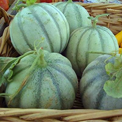 QiBest 20pcs/Bag Cantaloupe Seeds Delicious Melon Seeds Home Garden Plants Fruit Seeds Flowers: Clothing