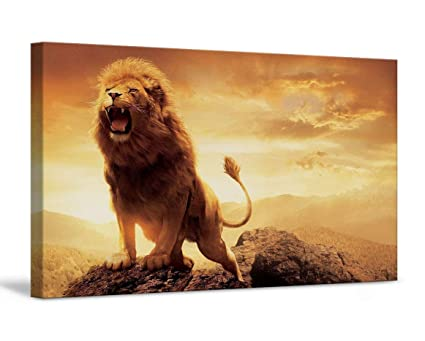 Amazon Com Foxycanvas Lion In Jungle Lion Roaring Wild Life