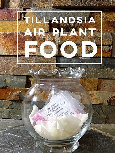 Bromeliad Tillandsia Fertilizer || AirPlant Food || 17-8-22 (12- Month Supply || ~0.8 oz)