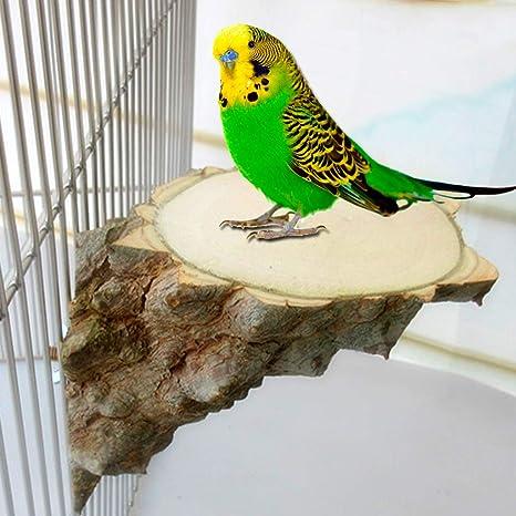 chenguld Perch Plataforma para Mascotas pájaros Loros hámster ...