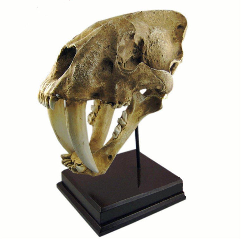 Gmasking Resin Smilodon Sabertooth Tiger 1:1 Skull Replica by Gmasking (Image #7)