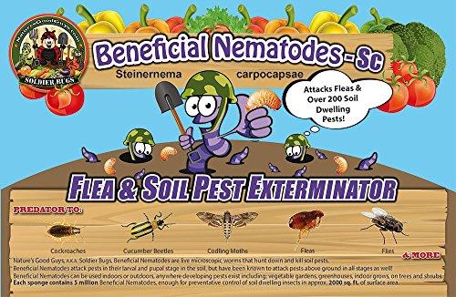 50-million-live-beneficial-nematodes-sc-flea-and-fly-exterminator